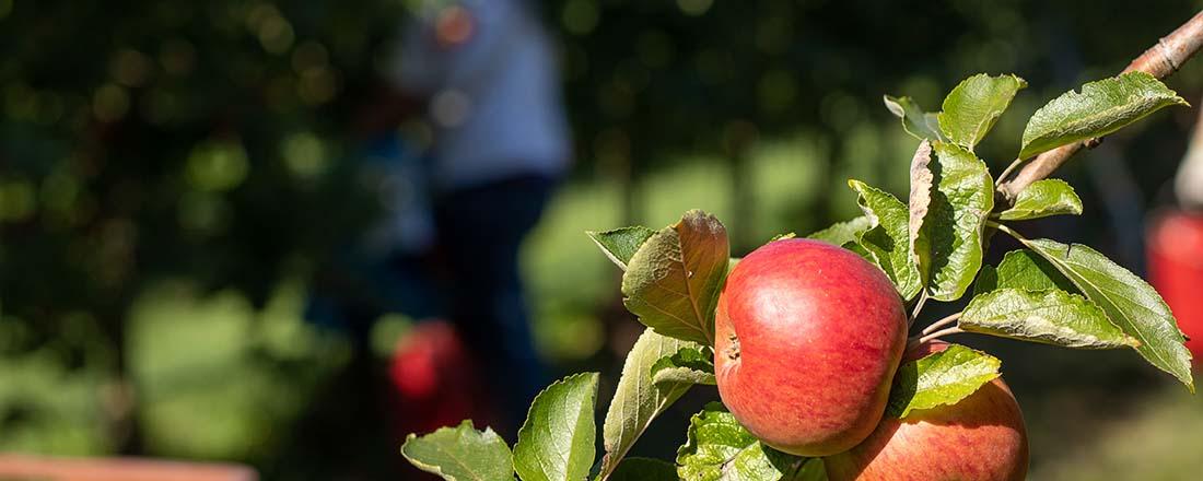 Welkom op Hoeve de Heivelden met biologisch fruit en dagbesteding aan mensen met een afstand tot de arbeidsmarkt (Bas Wetter)